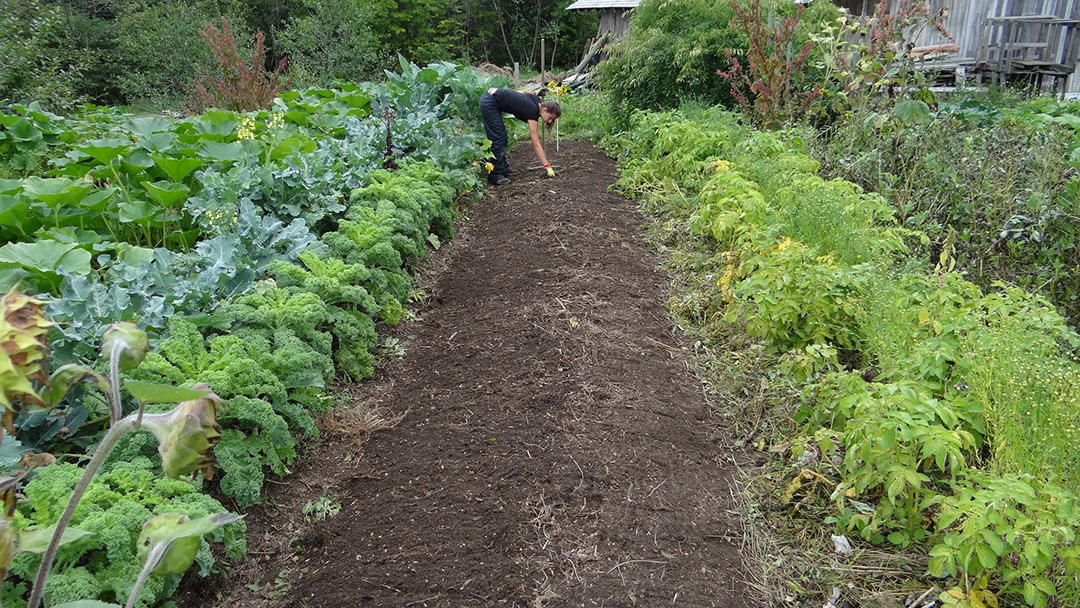 Frau in Gemüse-Garten