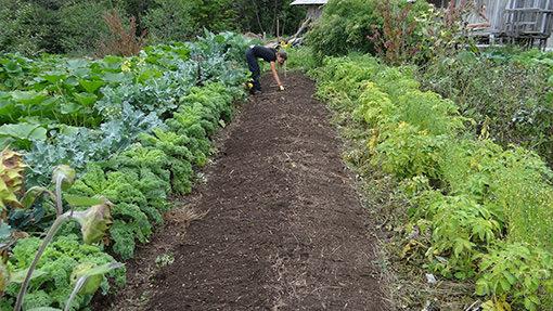 Frau arbeitet im Bio Garten