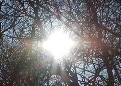 Einer der wichtigsten Lebenseinfluesse ist Sonne Licht Wärme
